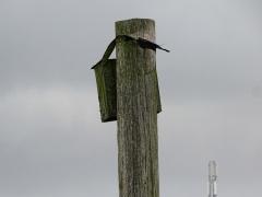 7-Fuglekassen-på-Habrehøj-1