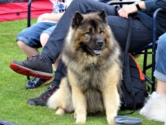 Hundeudstilling-i-Horne-3.-og-4.-august-2019-23