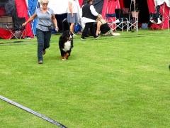 Hundeudstilling-i-Horne-3.-og-4.-august-2019-31