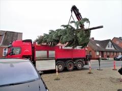 3-Juletræet-ankommer